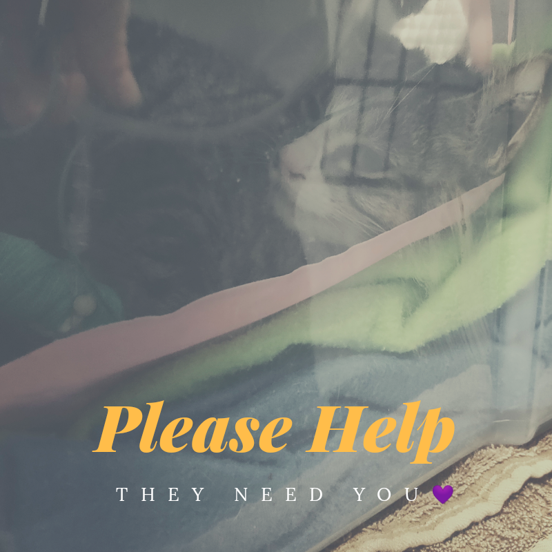 /home/fundraise/public_html/wp-content/uploads/2019/04/56696917_856693658012571_1860178918904954880_n.png
