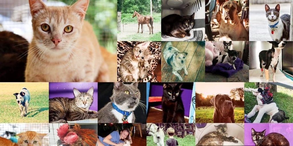 /home/fundraise/public_html/wp-content/uploads/2021/01/136382316_1076808332834874_5660380808626978537_n.jpg